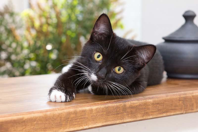 Gatto nero disteso sul davanzale