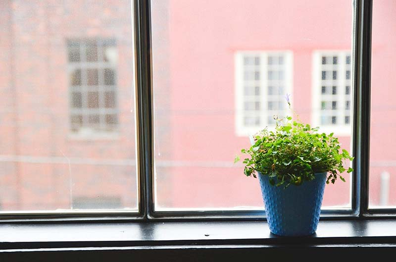 Vaso con pianta vicino alla finestra