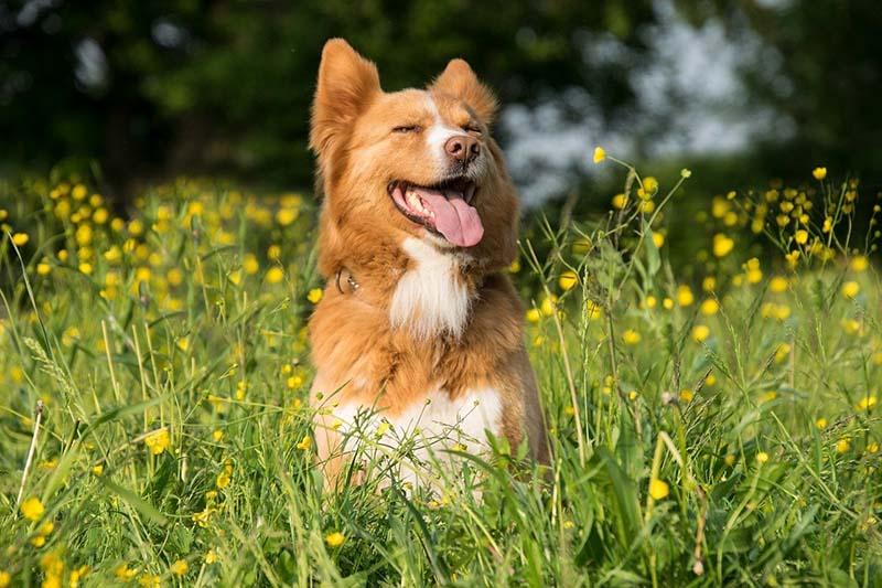 Cane felice nell'erba alta