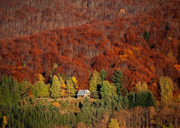 Foresta di latifoglie nordiche