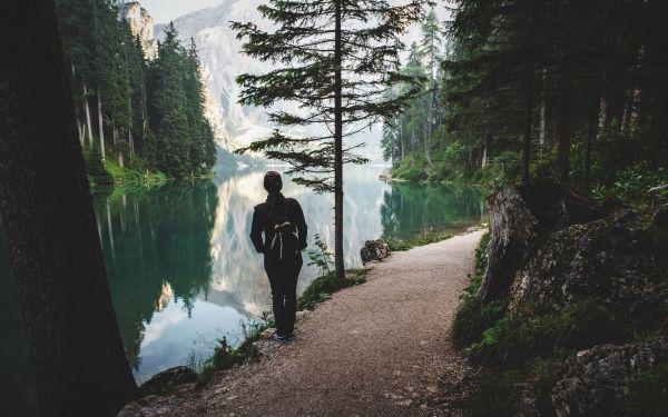 Panorama di un bosco con lago e montagna