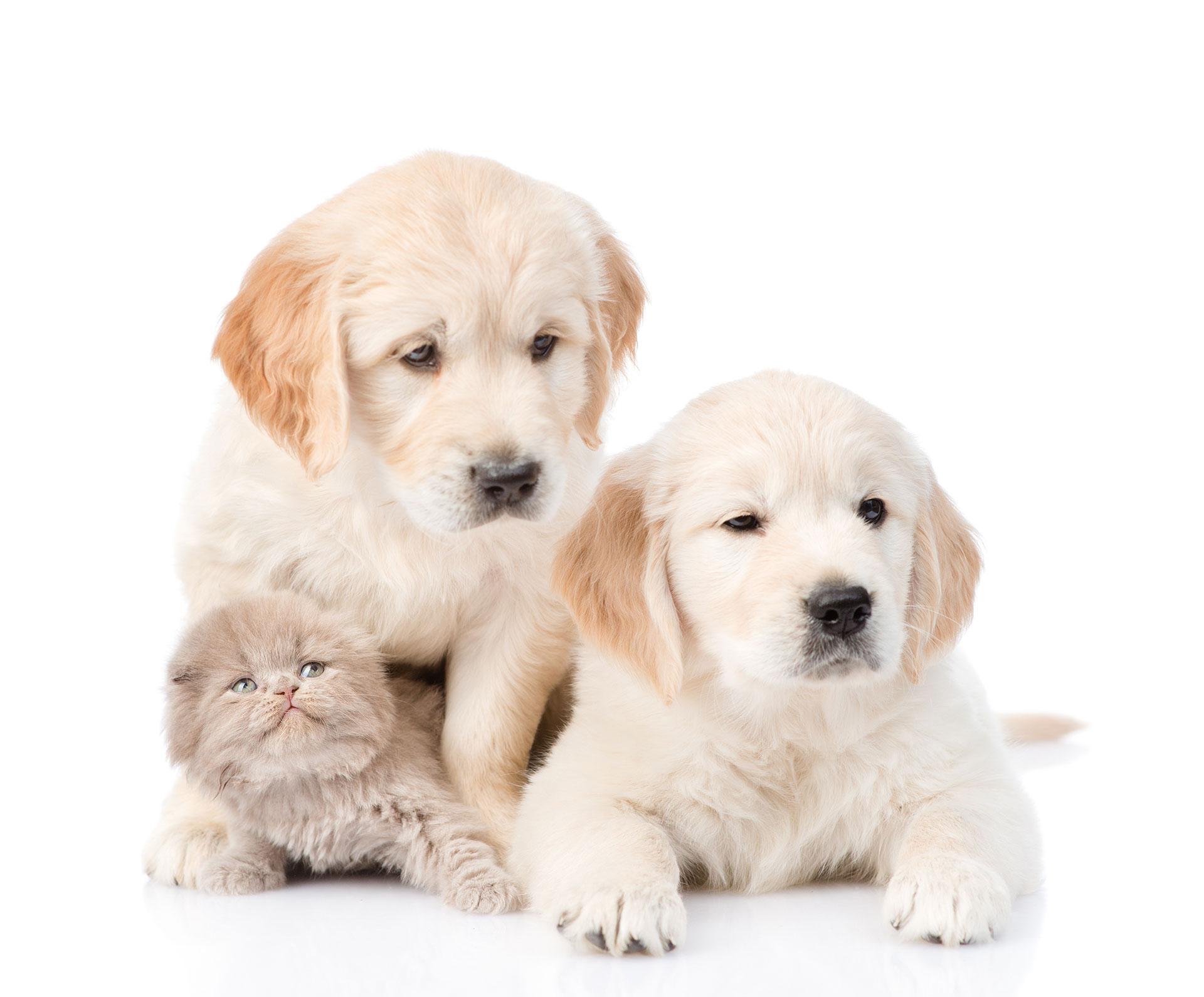 Animali 2 cani e 1 gatto